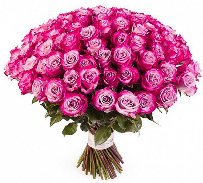 Открытка 101 роза, мая карандашами